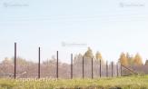 """Заказать забор из сетки рабицы с установкой монтажом под ключ. От УП """"СтройСетМет"""" из Минска"""